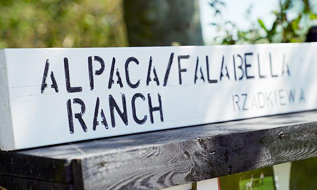 Alpaca & Falabella Ranch