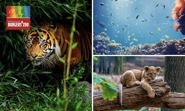 Entree voor Burgers' Zoo