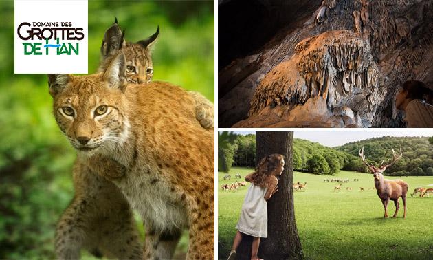 Entrée Grottes de Han, Parc Animalier et bien plus