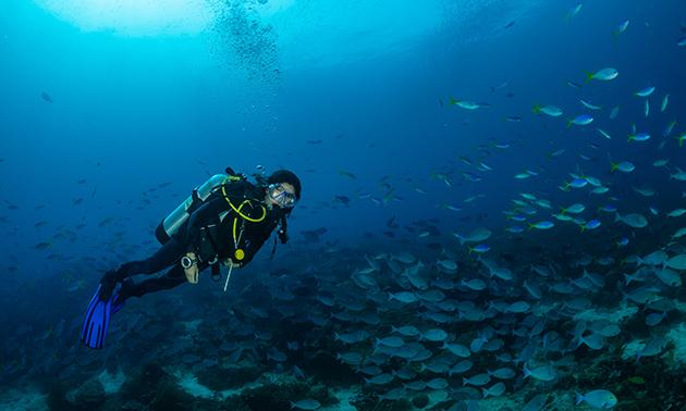 Workshop snorkelen of duikcursus