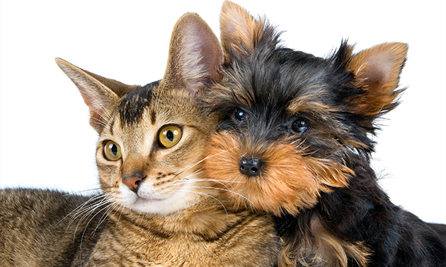 Toilettage chat ou chien