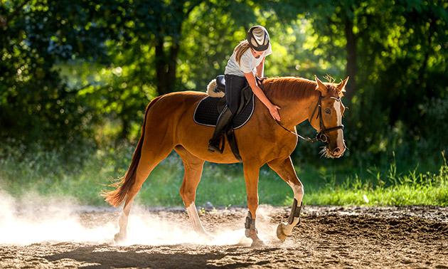 Introductieles(sen) paardrijden + drankje(s)