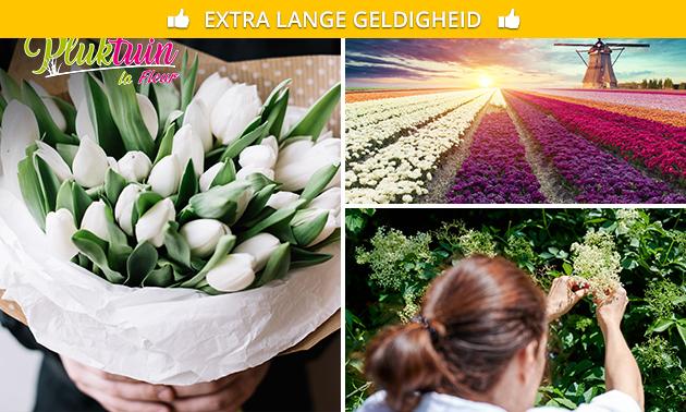 Waardebon om je eigen bloemen te plukken