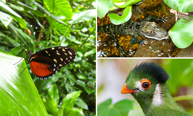 Entree voor Vlinders aan de Vliet
